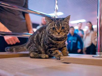 Выставка кошек в Фан Фан